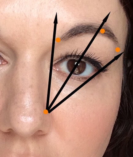 how to grow back sparse overplucked brows diagram of brow points inner corner above nose, arch just outside mid eye